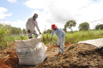 : Técnicos colhem a silagem do milho, no Centro Agrotecnológico de Palmas