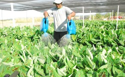 O secretário pontou também que o recurso financeiro além de diversificar as atividades rurais, contribui com a fixação do homem no campo, gera renda e emprego