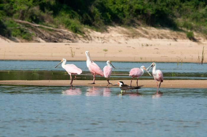 O site vai divulgar informações sobre a localização do PEC, rios, fauna, flora, legislação e produção científica.